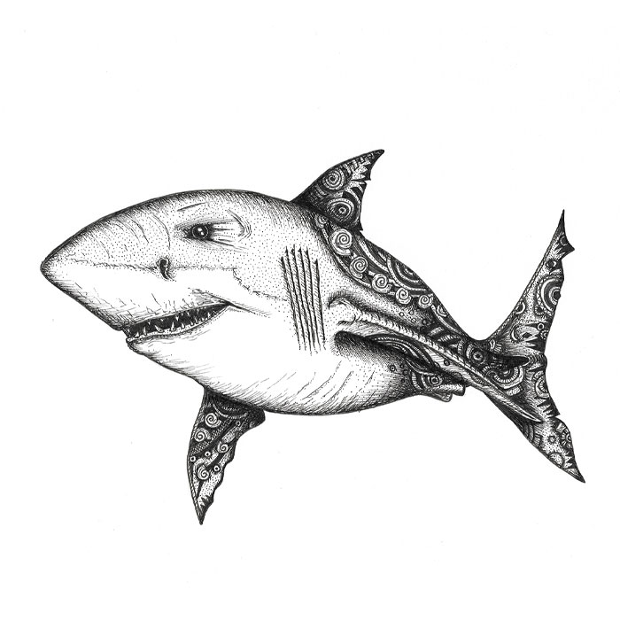 Shark pen sketch
