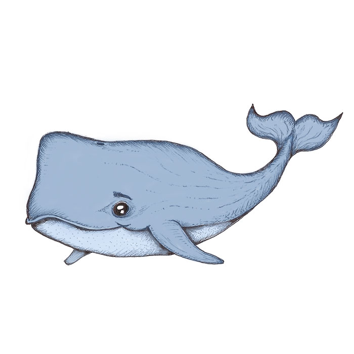 Sperm whale drawing