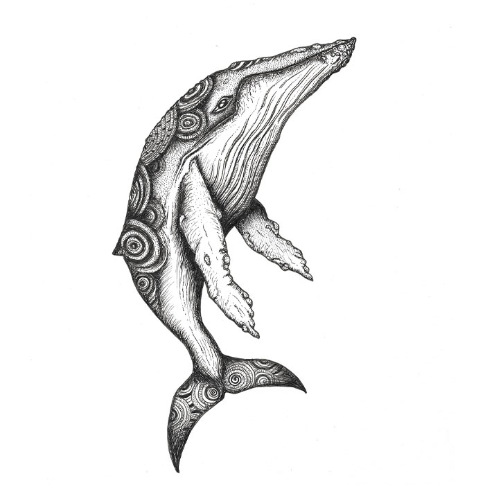 Whale pen sketch