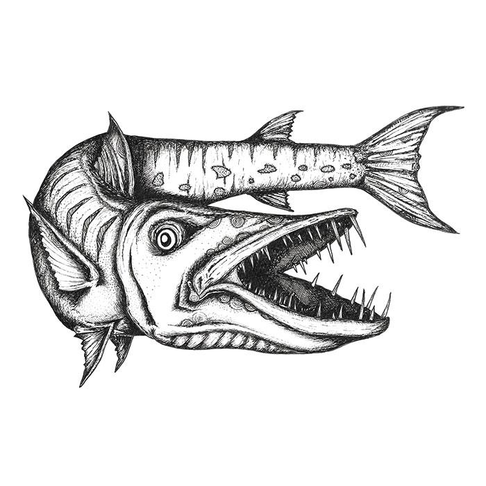 Barracuda drawing