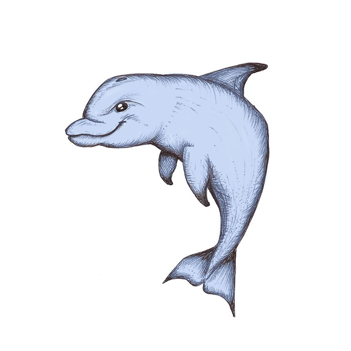 Dolphin drawing