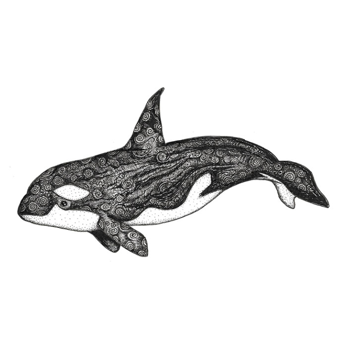 Killer whale pen sketch
