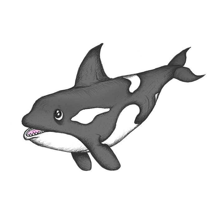 Orca cartoon drawing