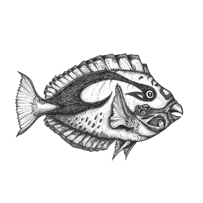 Parrot fish drawing