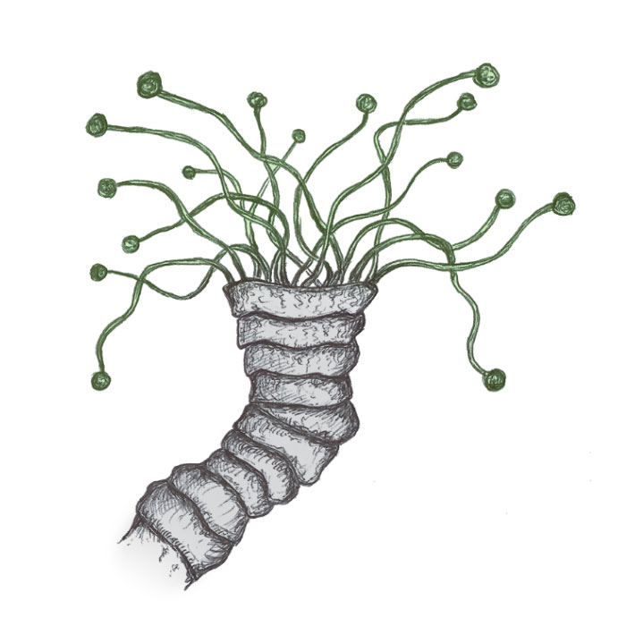 Coral with tentacles drawing