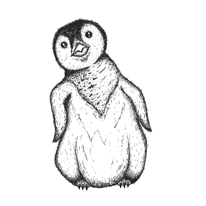Cute penguin drawing