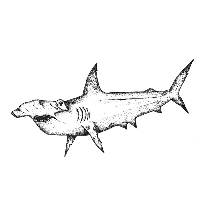 Hammerhead shark pen sketch