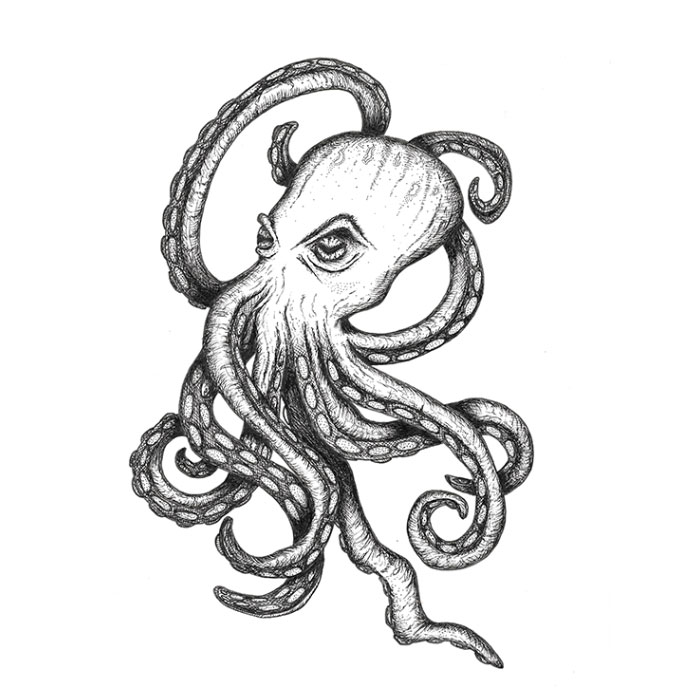 Octopus pen sketch