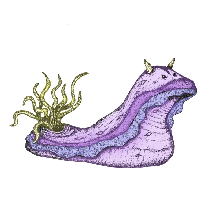 Sea slug drawing