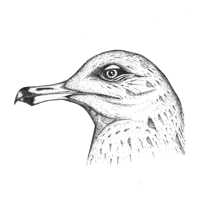 Seagull pen sketch