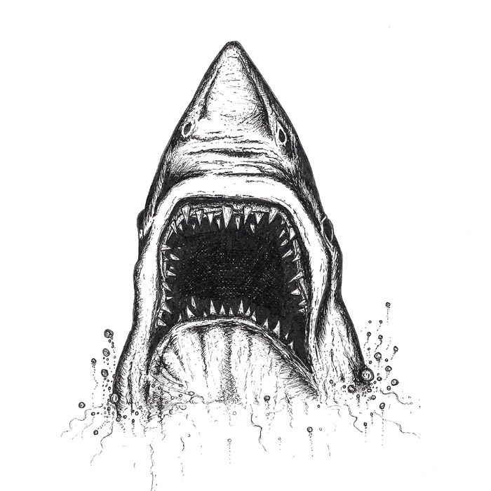 Shark head drawing