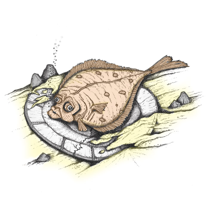 Flatfish finds a plate drawing