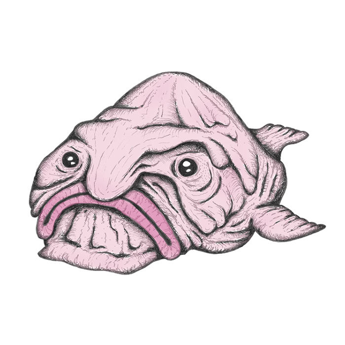 Blobfish Drawing