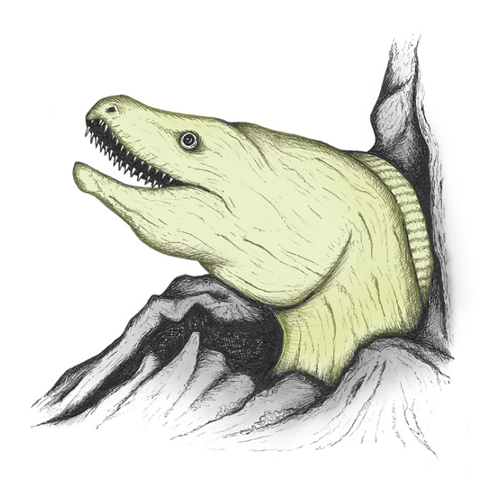 Moray eel drawing