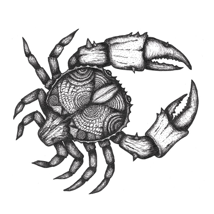 Detailed crab drawing